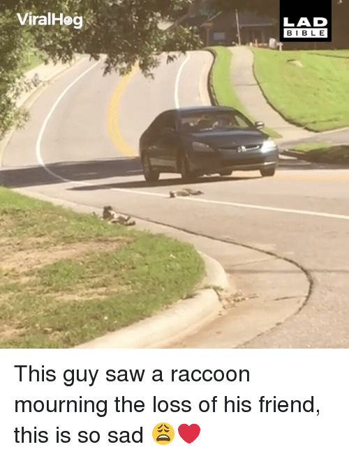 Memes, Saw, and Bible: ViralHog  LAD  BIBLE This guy saw a raccoon mourning the loss of his friend, this is so sad 😩❤️