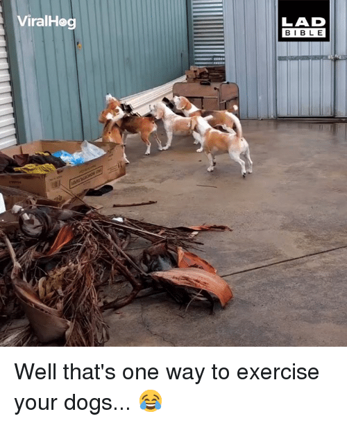 Dank, Dogs, and Bible: ViralHog  LAD  BIBLE Well that's one way to exercise your dogs... 😂