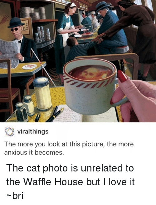 Love, Memes, and Waffle House: viralthings  The more you look at this picture, the more  anxious it becomes. The cat photo is unrelated to the Waffle House but I love it ~bri