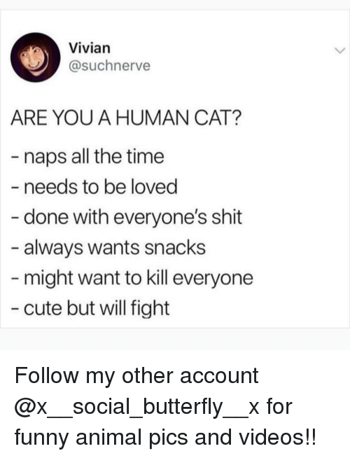 Cute, Funny, and Memes: Vivian  @suchnerve  ARE YOU A HUMAN CAT?  - naps all the time  - needs to be loved  done with everyone's shit  always wants snacks  might want to kill everyone  cute but will fight Follow my other account @x__social_butterfly__x for funny animal pics and videos!!