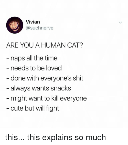 Cute, Shit, and Time: Vivian  @suchnerve  ARE YOU A HUMAN CAT?  naps all the time  needs to be loved  - done with everyone's shit  - always wants snacks  might want to kill everyone  cute but will fight this... this explains so much