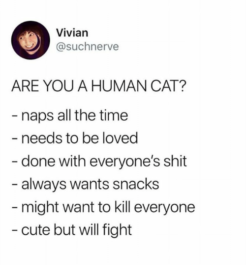 Cute, Dank, and Shit: Vivian  @suchnerve  ARE YOU A HUMAN CAT?  naps all the time  needs to be loved  done with everyone's shit  always wants snacks  might want to kill everyone  - cute but will fight