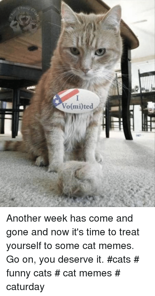 funny cats: Vo(mi)ted Another week has come and gone and now it's time to treat yourself to some cat memes. Go on, you deserve it. #cats # funny cats # cat memes # caturday