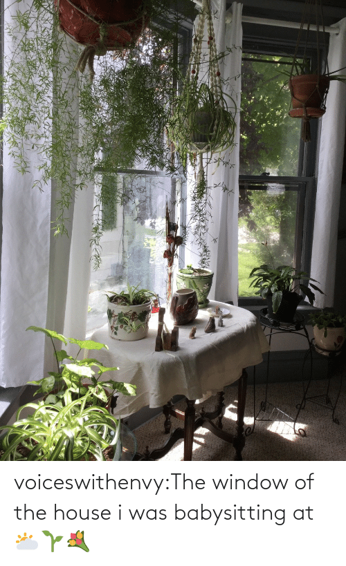 window: voiceswithenvy:The window of the house i was babysitting at 🌥🌱💐