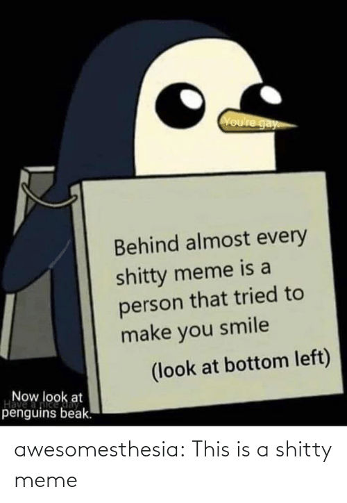 Penguins: Voure gay  Behind almost every  shitty meme is a  person that tried to  make you smile  (look at bottom left)  Now look at  Have  penguins beak. awesomesthesia:  This is a shitty meme
