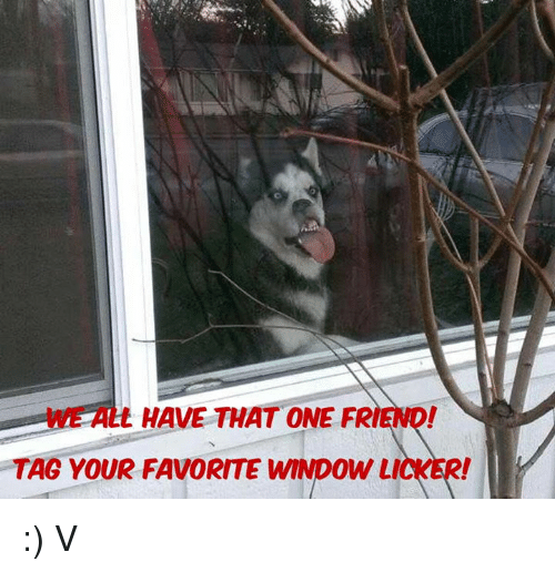 Funny window licker memes of 2017 on sizzle you never know for Window licker meme