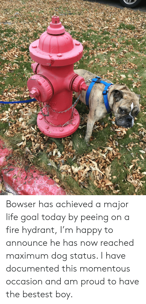 momentous: W Bowser has achieved a major life goal today by peeing on a fire hydrant, I'm happy to announce he has now reached maximum dog status. I have documented this momentous occasion and am proud to have the bestest boy.