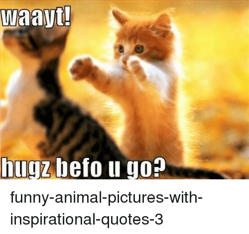 25+ Best Memes About Funny Animal Pictures