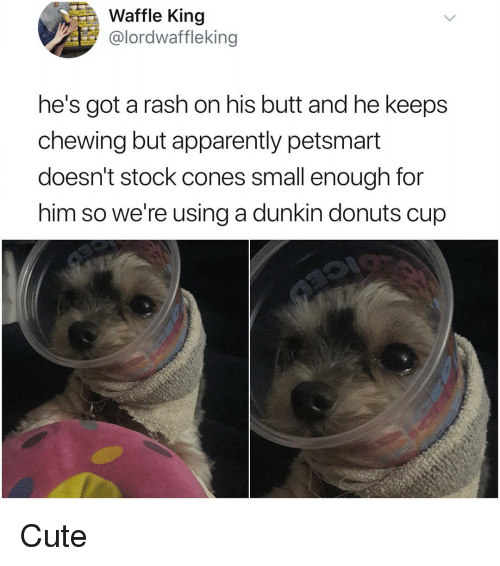 Apparently, Butt, and Cute: Waffle King  @lordwaffleking  he's got a rash on his butt and he keeps  chewing but apparently petsmart  doesn't stock cones small enough for  him so we're using a dunkin donuts cup Cute