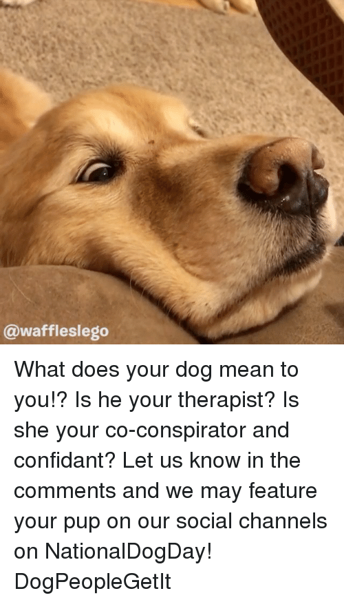 Memes, Mean, and What Does: @waffleslego What does your dog mean to you!? Is he your therapist? Is she your co-conspirator and confidant? Let us know in the comments and we may feature your pup on our social channels on NationalDogDay! DogPeopleGetIt