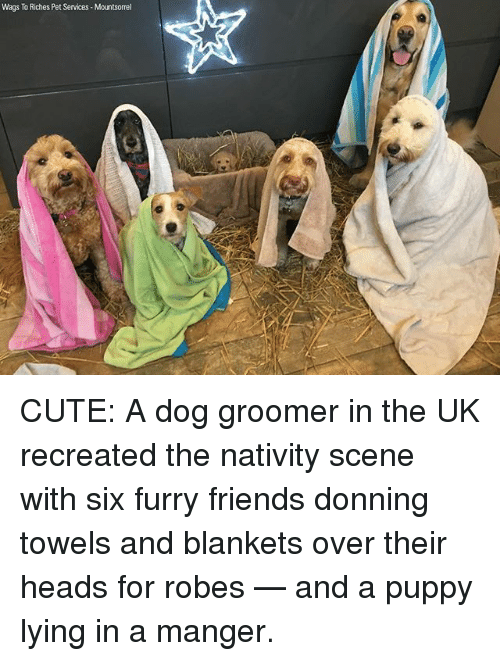 nativity scene: Wags To Riches Pet Services Mountsorrel CUTE: A dog groomer in the UK recreated the nativity scene with six furry friends donning towels and blankets over their heads for robes — and a puppy lying in a manger.