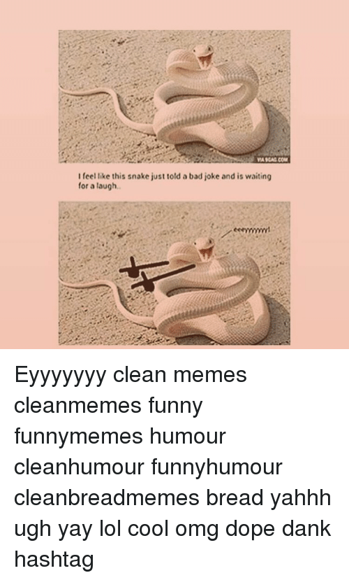 Bad, Dank, and Dope: WAIGAG COM  I feel like this snake just told a bad joke and is waiting  for a laugh. Eyyyyyyy clean memes cleanmemes funny funnymemes humour cleanhumour funnyhumour cleanbreadmemes bread yahhh ugh yay lol cool omg dope dank hashtag