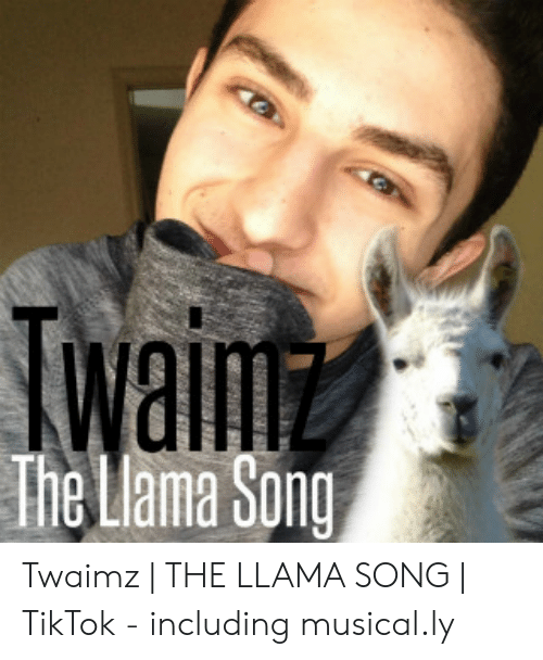 Twaimz: waim  The Llama Song Twaimz | THE LLAMA SONG | TikTok - including musical.ly