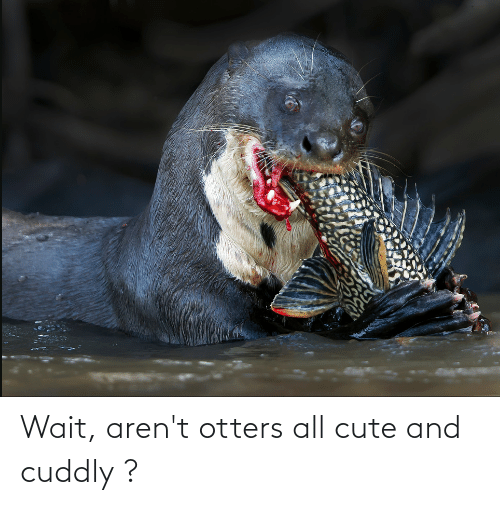 Otters: Wait, aren't otters all cute and cuddly ?