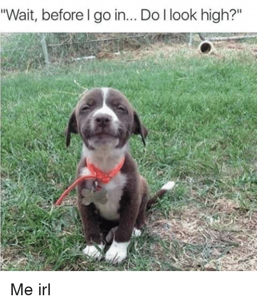 """Irl and Do-I-Look-High: """"Wait, before I go in... Do I look high?"""" Me irl"""