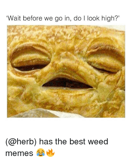 Memes, Weed, and Best: 'Wait before we go in, do l look high?' (@herb) has the best weed memes 😂🔥