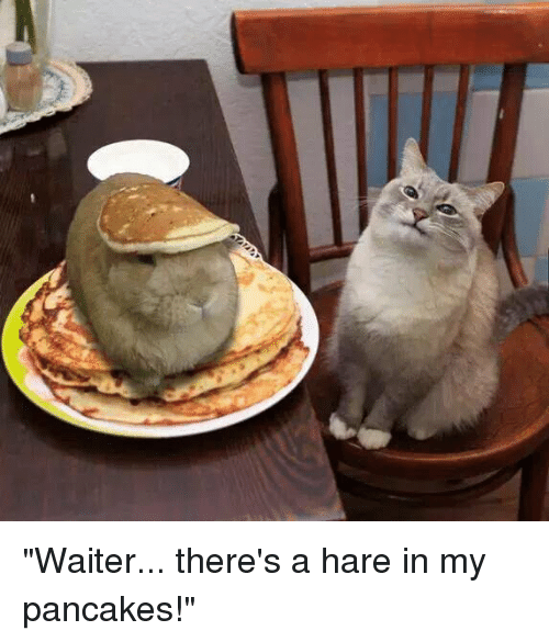 """memes: """"Waiter... there's a hare in my pancakes!"""""""