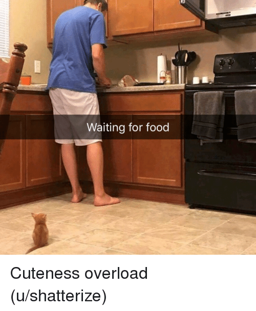 Waiting For Food: Waiting for food Cuteness overload (u/shatterize)