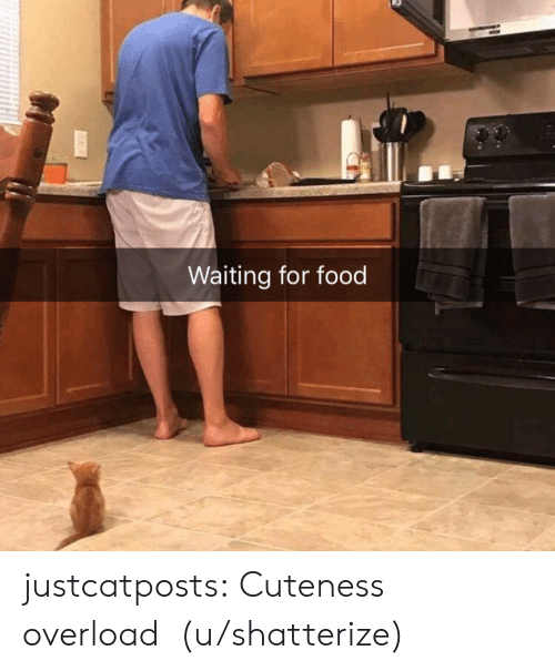 Waiting For Food: Waiting for food justcatposts: Cuteness overload (u/shatterize)