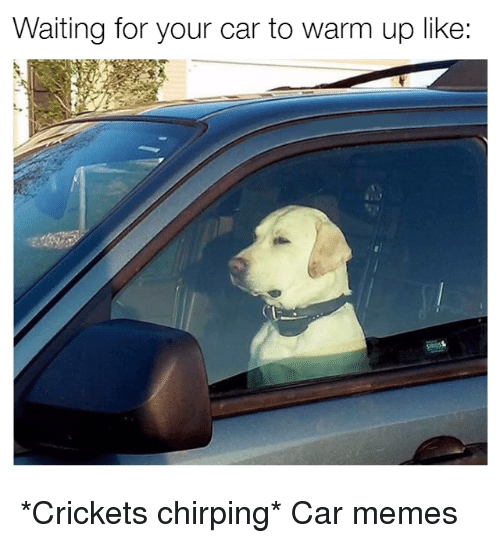 Crickets Chirp: Waiting for your car to warm up like: *Crickets chirping* Car memes