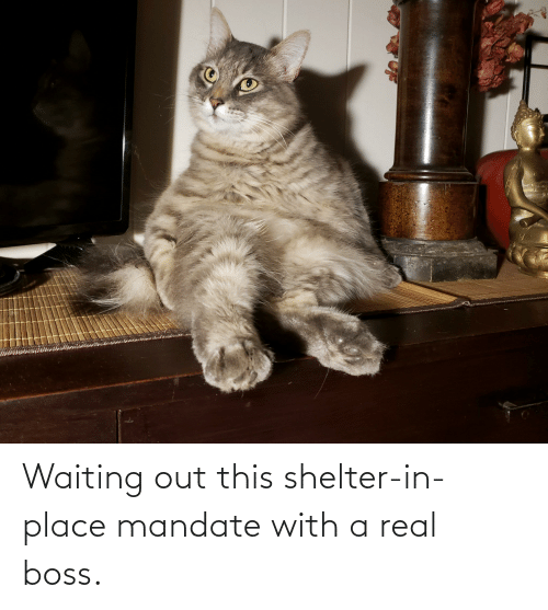 mandate: Waiting out this shelter-in-place mandate with a real boss.