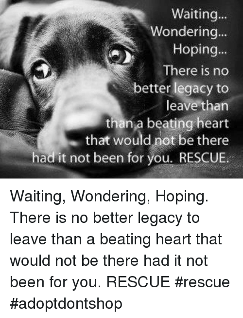 Memes, Heart, and Legacy: Waiting...  Wondering  84  Hoping...  There is no  better legacy to  leave than  than a beating heart  . that would not be there  had it not been for you. RESCUE. Waiting, Wondering, Hoping. There is no better legacy to leave than a beating heart that would not be there had it not been for you. RESCUE             #rescue #adoptdontshop