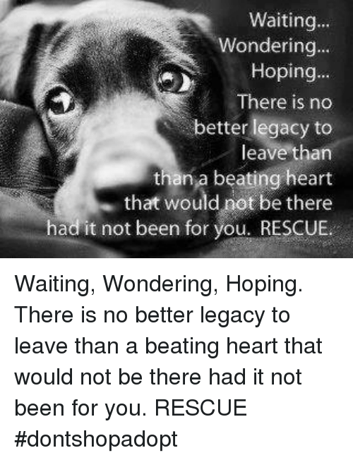 Memes, Heart, and Legacy: Waiting...  Wondering...  Hoping...  There is no  better legacy to  leave than  than a beating heart  that would not be there  had it not been for you. RESCUE Waiting, Wondering, Hoping. There is no better legacy to leave than a beating heart that would not be there had it not been for you.  RESCUE    #dontshopadopt