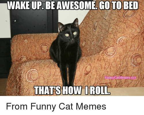 25+ Best Memes About Funny Cats Memes