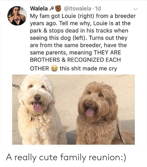Louie: Walela @itswalela 1d  My fam got Louie (right) from a breeder  years ago. Tell me why, Louie is at the  park & stops dead in his tracks when  seeing this dog (left). Turns out they  are from the same breeder, have the  same parents, meaning THEY ARE  BROTHERS & RECOGNIZED EACH  OTHER this shit made me cry A really cute family reunion:)