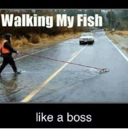 Walking my fish like a boss funny meme on sizzle for Funny fishing pics
