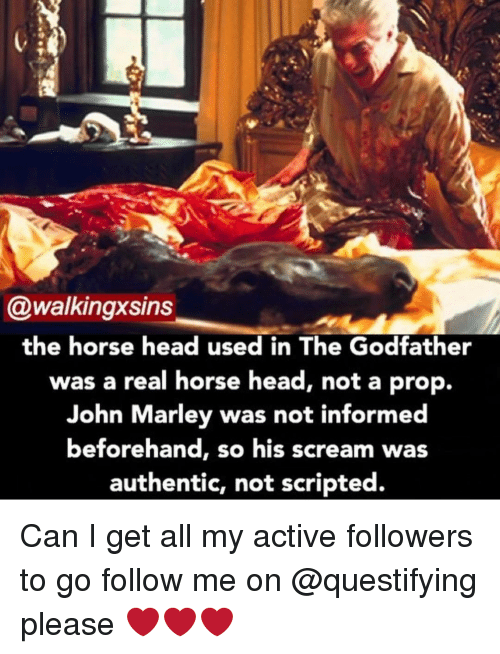 godfathers: @walkingxsins  the horse head used in The Godfather  was a real horse head, not a prop.  John Marley was not informed  beforehand, s  his scream was  authentic, not scripted. Can I get all my active followers to go follow me on @questifying please ❤️❤️❤️