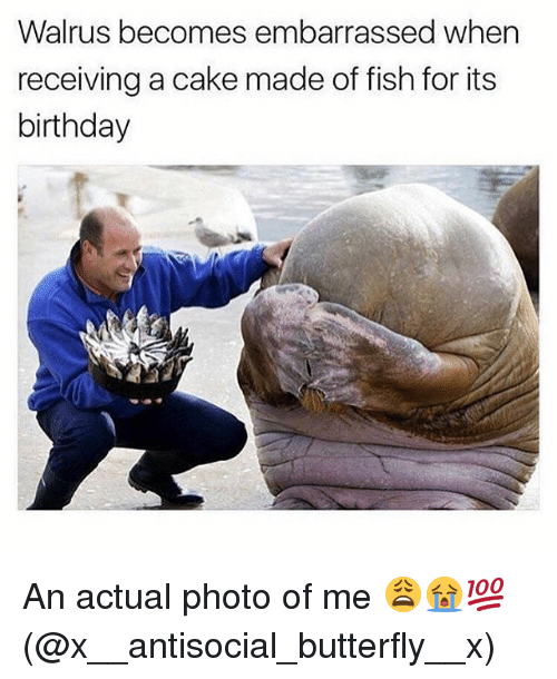 Birthday, Memes, and Butterfly: Walrus becomes embarrassed when  receiving a cake made of fish for its  birthday An actual photo of me 😩😭💯(@x__antisocial_butterfly__x)