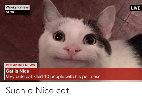 Is Nice: Waluigi fortress  LIVE  04:20  BREAKING NEWS  Cat is Nice  Very cute cat kiled 10 people with his politness Such a Nice cat