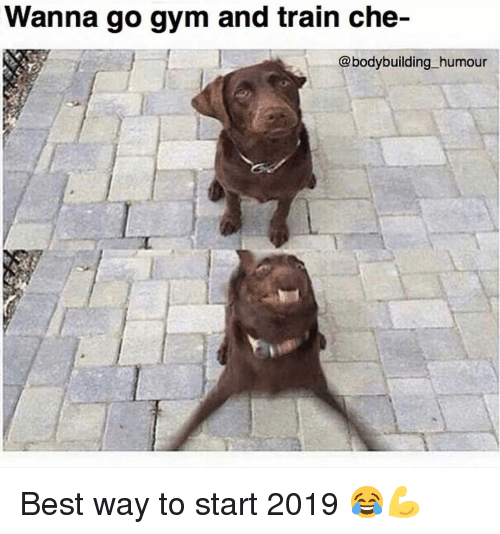 Bodybuilding: Wanna go gym and train che-  @bodybuilding humour Best way to start 2019 😂💪