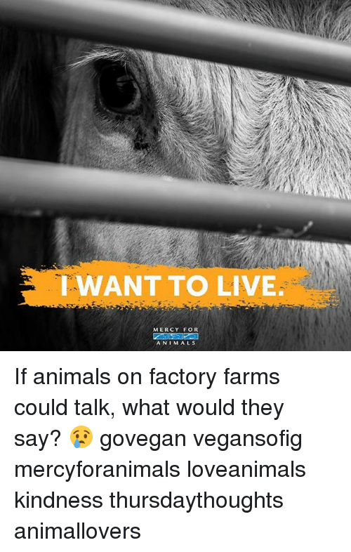 Animals, Memes, and Live: WANT TO LIVE  MERCY FOR  ANIMALS If animals on factory farms could talk, what would they say? 😢 govegan vegansofig mercyforanimals loveanimals kindness thursdaythoughts animallovers