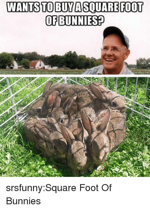 Bunnies: WANTS TO BUYA SQUAREFOOT  OF BUNNIES? srsfunny:Square Foot Of Bunnies