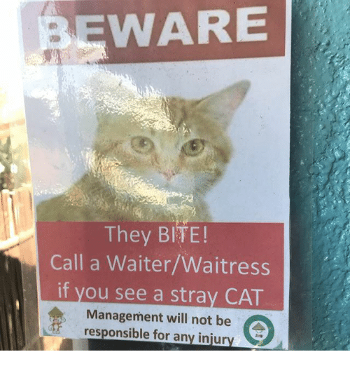 Memes, 🤖, and Cat: WARE  They BITE!  Call a Waiter/Waitress  if you see a stray CAT  Management will not be  responsible for any injur