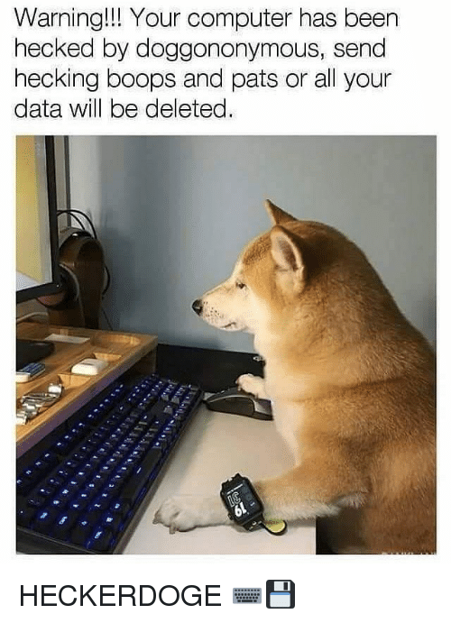 Memes, Computer, and Been: Warning!!! Your computer has been  hecked by doggononymous, send  hecking boops and pats or all your  data will be deleted. HECKERDOGE ⌨💾