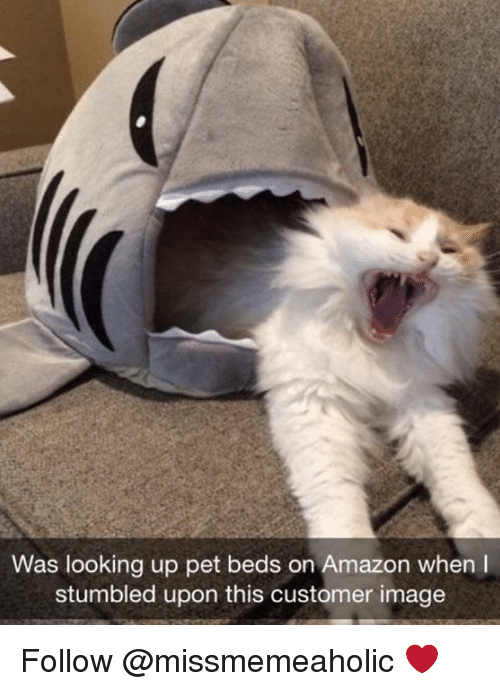 Amazon, Memes, and Image: Was looking up pet beds on Amazon when I  stumbled upon this customer image Follow @missmemeaholic ❤️
