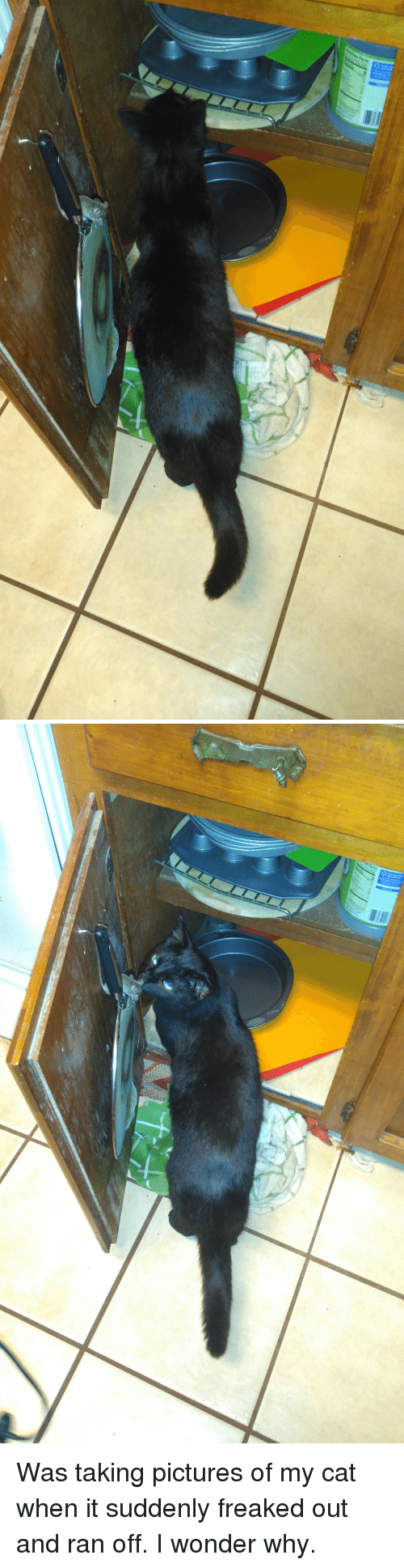 Freaked Out: Was taking pictures of my cat when it suddenly freaked out and ran off. I wonder why.