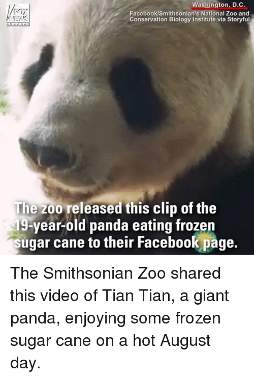 Facebook, Frozen, and Memes: Washington, D.C.  Facebook/Smithsonian's National Zoo and  Conservation Biology Institute via Storyful  The zoo released this clip of the  19-year-old panda eating frozen  sugar cane to their Facebook page.  their Facebook page The Smithsonian Zoo shared this video of Tian Tian, a giant panda, enjoying some frozen sugar cane on a hot August day.