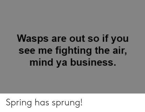 mind ya business: Wasps are out so if you  see me fighting the air,  mind ya business. Spring has sprung!