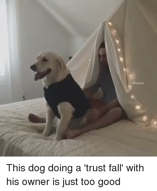 Fall: @wat ki This dog doing a 'trust fall' with his owner is just too good