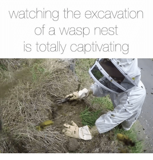 Memes, 🤖, and Wasp: watching the excavation  of a wasp nest  is totally captivating