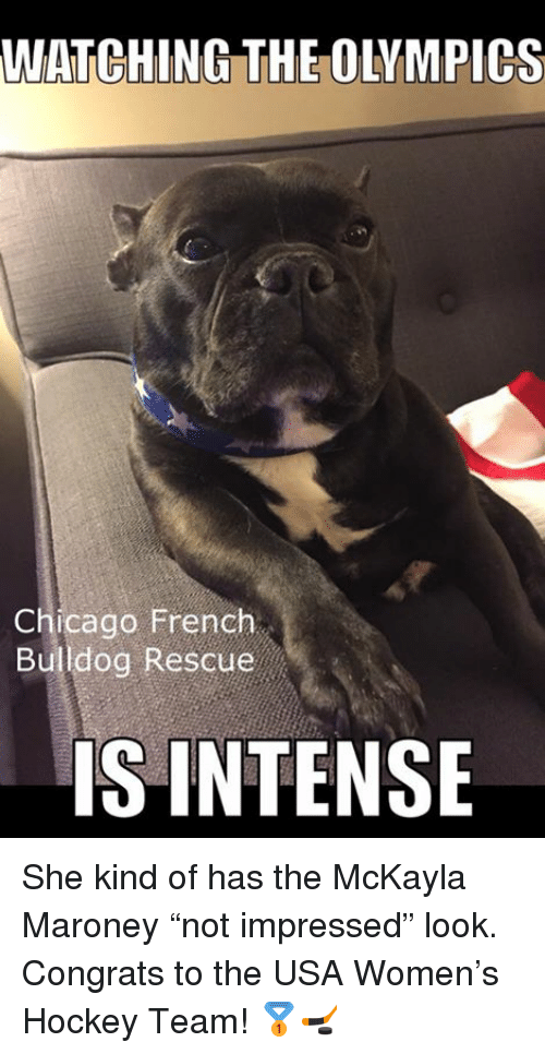 "Maroney: WATCHING THE OLYMPICS  Chicago French  Bulldog Rescue  IS INTENSE She kind of has the McKayla Maroney ""not impressed"" look. Congrats to the USA Women's Hockey Team! 🥇🏒"