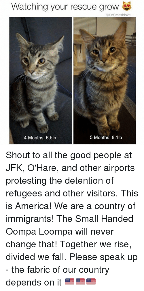 detente: Watching your rescue grow  Dr Smashlove  5 Months: 8.1lb  4 Months: 6.5lb Shout to all the good people at JFK, O'Hare, and other airports protesting the detention of refugees and other visitors. This is America! We are a country of immigrants! The Small Handed Oompa Loompa will never change that! Together we rise, divided we fall. Please speak up - the fabric of our country depends on it 🇺🇸🇺🇸🇺🇸