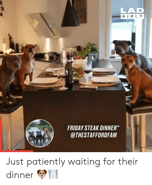 """steak: WAY  FLRE  LAD  BIBLE  FRIDAY STEAK DINNER""""  @THESTAFFORDFAM Just patiently waiting for their dinner 🐶🍽"""