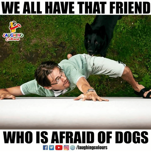 Dogs, Indianpeoplefacebook, and Who: WE ALL HAVE THAT FRIEND  AUGHING  WHO IS AFRAID OF DOGS
