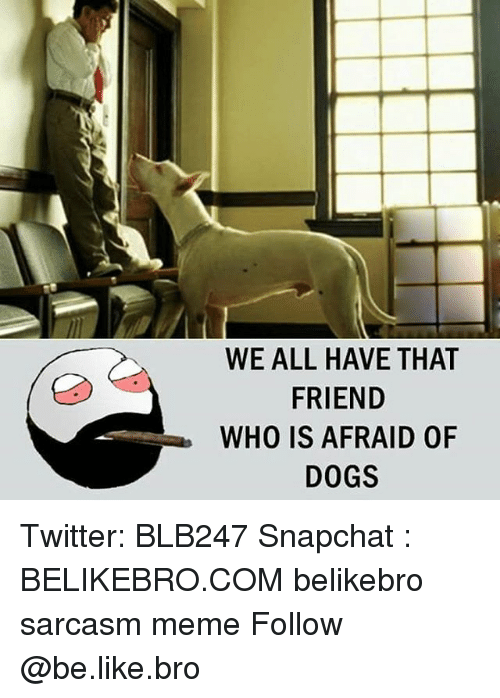 Be Like, Dogs, and Meme: WE ALL HAVE THAT  FRIEND  WHO IS AFRAID OF  DOGS Twitter: BLB247 Snapchat : BELIKEBRO.COM belikebro sarcasm meme Follow @be.like.bro