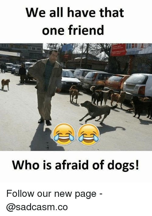 Dogs, Memes, and 🤖: We all have that  one friend  Who is afraid of dogs! Follow our new page - @sadcasm.co